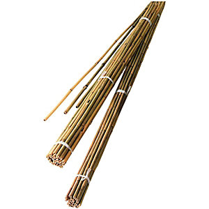 Wickes Bamboo Canes 1.5mPack of 10