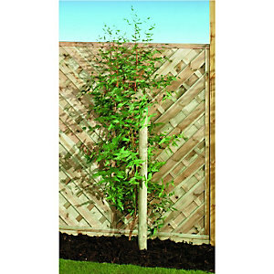 Wickes Timber Garden Tree Stake 50mm x 2.4m