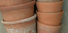 Guide showing how to plant in pots and hanging baskets