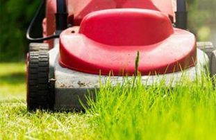 Mow your lawn regularly
