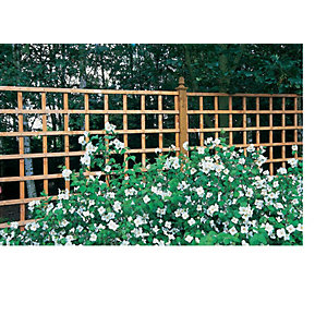 Larchlap Dip Treated Trellis Panel 1220mm x 1828mm