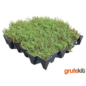 Sedum Grufekit M2 Inc. Protection Fleece